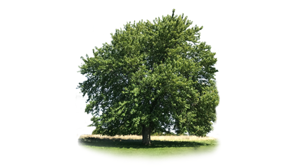 Der Baum als Wegbegleiter